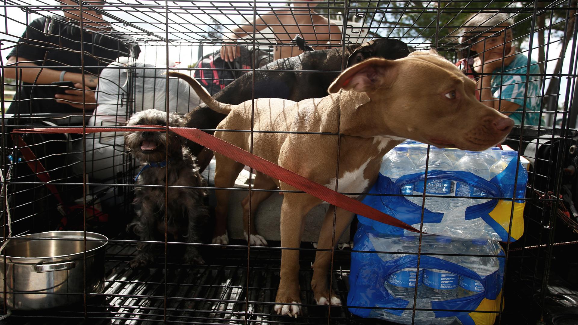 Dog hurricane_1553014881208.jpg-846652698.jpg