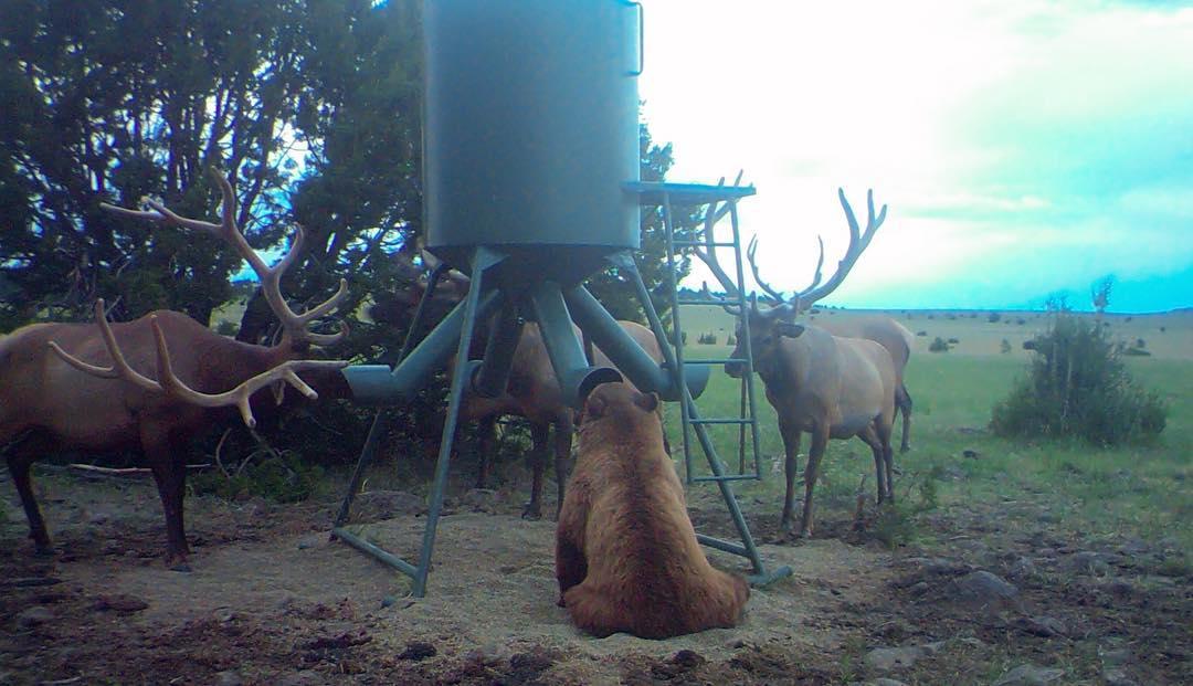 bear and elk 1_1553289521467.jpg-846624080.jpg