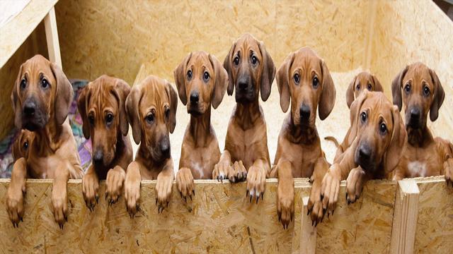 Puppies_1556458407725.jpg