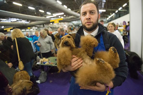 bearded man and furry dog-846653543