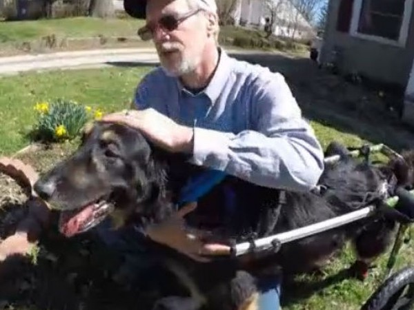 Ohio non-profit owners rescue abandoned, paralyzed dog after fitting him with wheelchair