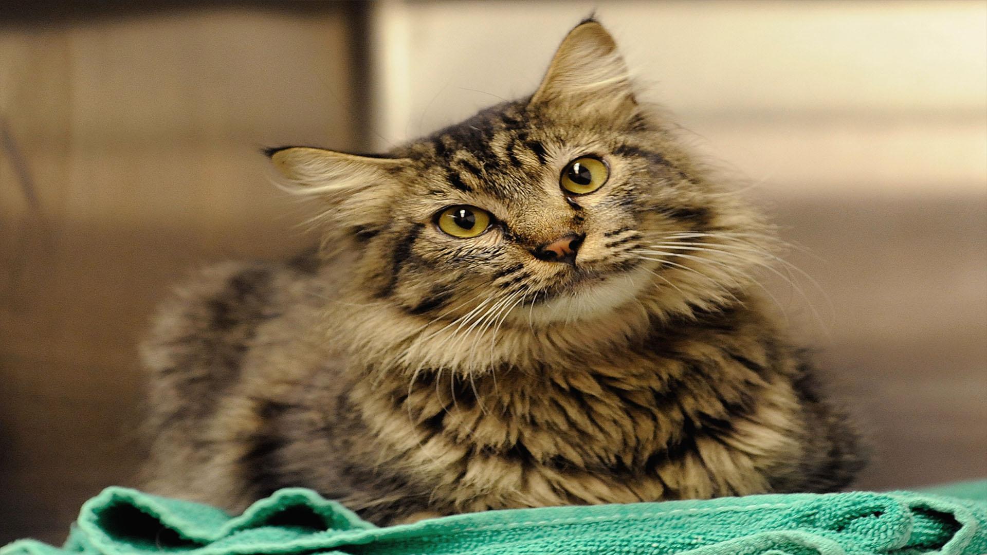 Cat generic_1557583688879.jpg-846652698.jpg