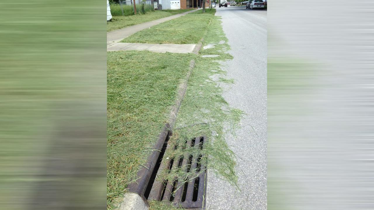 grass_1558041123957.jpg