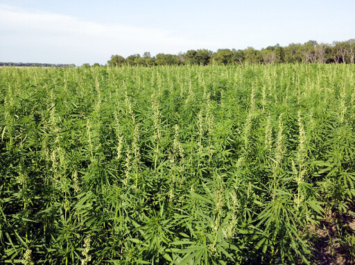 Ohio Farmers One Step Closer To Hemp Planting After Rule Approval