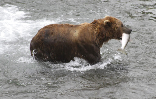 Travel-Trip-Alaska-Katmai Bears