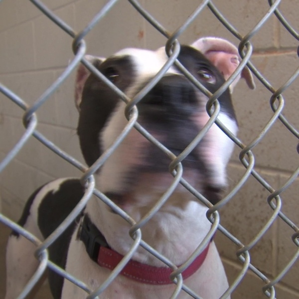 Max's Mission: Several long term stay dogs still need forever homes in Central Ohio