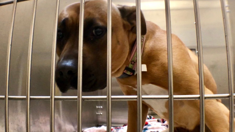 Frankin County Dog Shelter and Adoption Center mixed breed