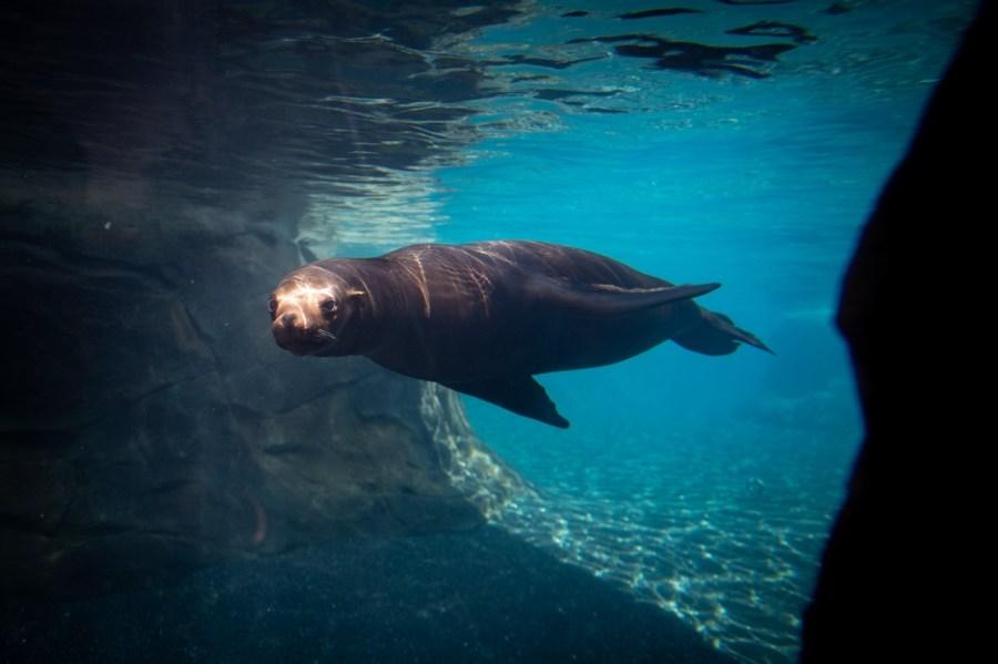 Columbus Zoo S New Exhibit Adventure Cove Opening Friday Nbc4 Wcmh Tv