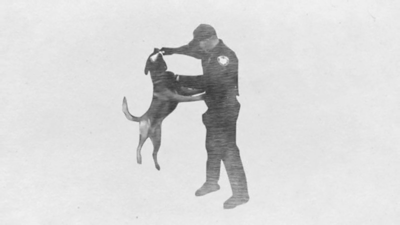 Pickaway County Sheriff's k9 canine Harry