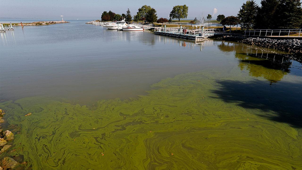 Lake Erie algae algal bloom 2017